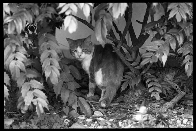 睨む猫099.jpg
