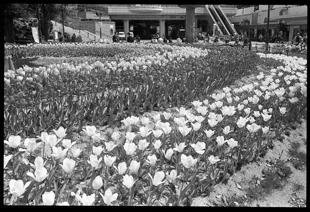 阪神尼崎駅前.jpg
